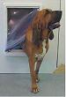 Ideal dog door