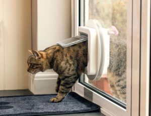Cat door installed in glass