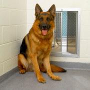 BiteGuard KennelPlex kennel Door with dog