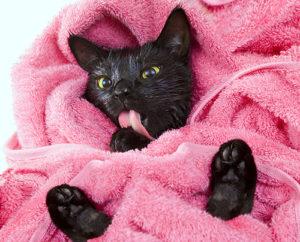 Cute black cat in towel