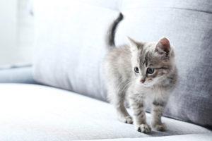 Kitten standing on a sofa