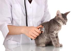 Kitten visiting the veterinarian