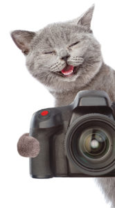 Grey cat holding camera